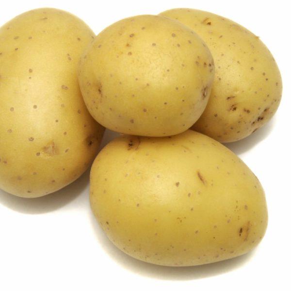 patata odc