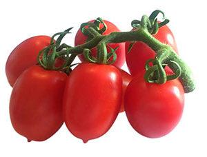 pomodoro-pixel-agrisole1
