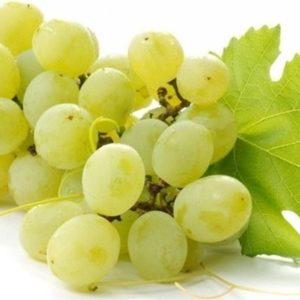 uva-bianca trev